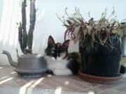 CORTE INTRO - Peppa sur la terrasse